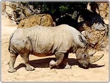 Bioparc Valencia Zoo