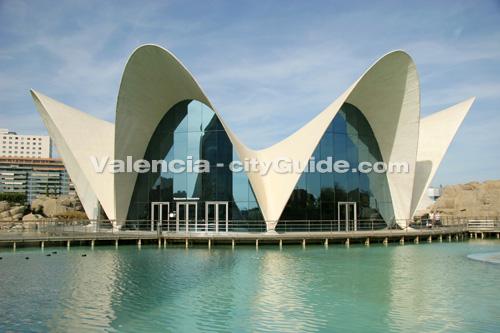Acquario di valencia oceanografico citt delle arti e for Oceanografico valencia