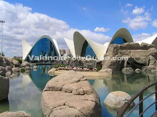 Aquarium in valencia spain 1000 aquarium ideas for Oceanografic valencia